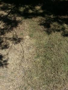 controlgrass