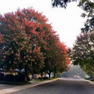 StreetView – Take a Walk