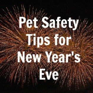 Pet Safety on New Years Eve