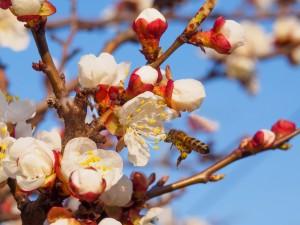 Bee in tree