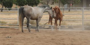 MJC Equine Unit offers Open House and Horse Sale December 3