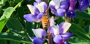 BigView – Meet the Pollinators April 7